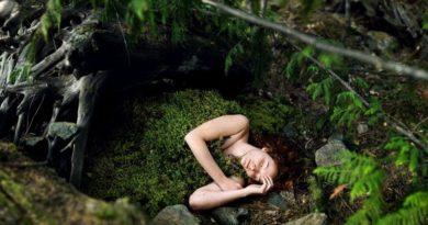 Лесная постель из лесной подстилки