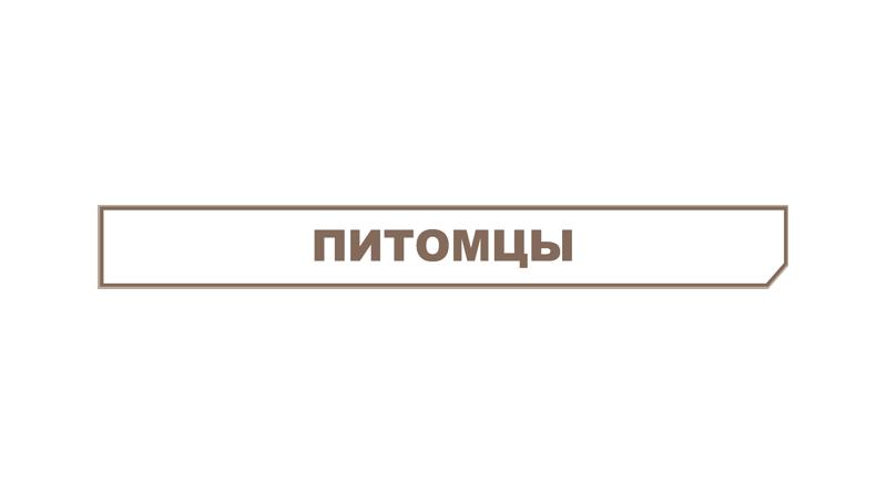 Питомцы метро 2033 вк