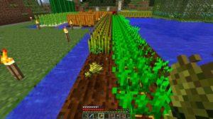 семена пшеницы в майнкрафт